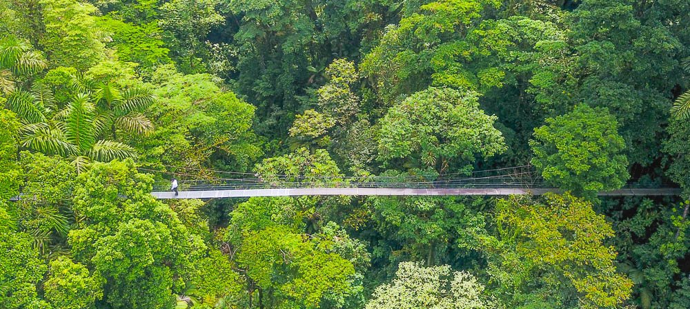 a person standing on arenal hanging bridges mistico park aerial view