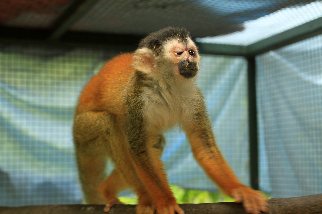 osa animal shelter blog titi monkey injured 