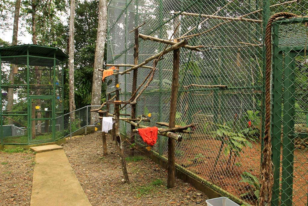 osa animal shelter blog enclosure 