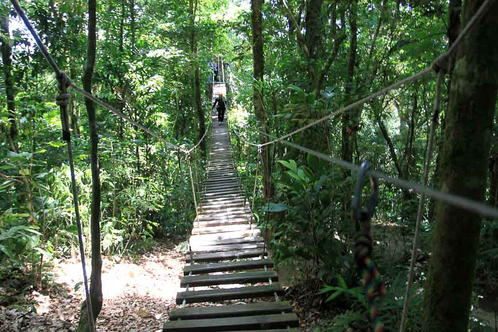 percent aventura monkey bridge 