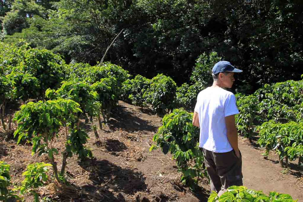 Coffee and conservation in Monteverde