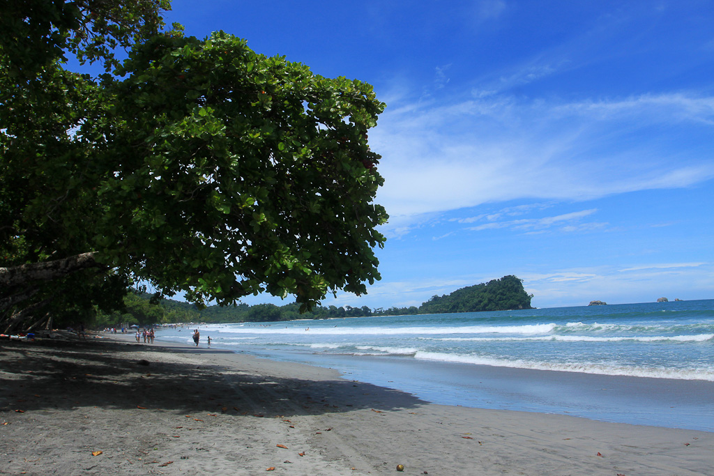 things to do manuel antonio beach tree 