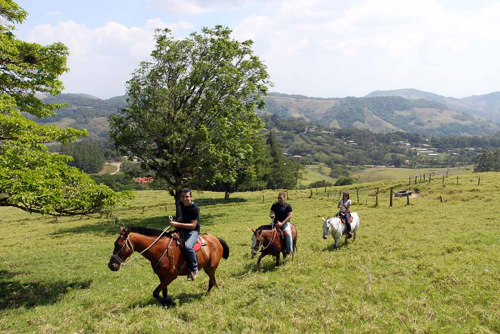 helaconia ranch horses   - Costa Rica