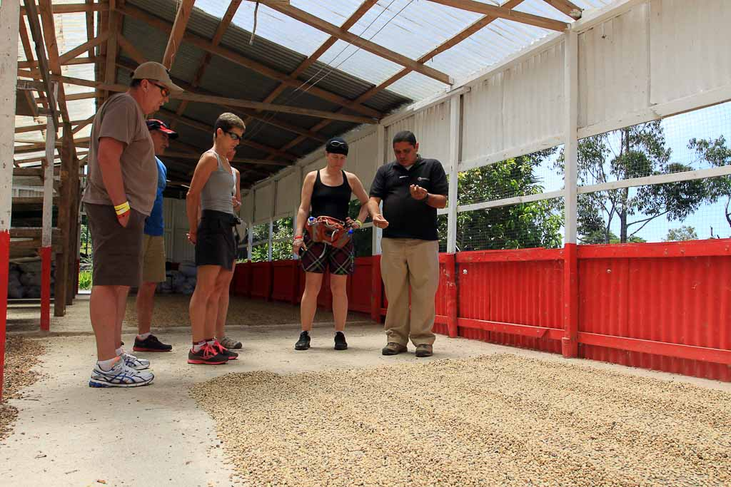 helaconia ranch learning about coffee 