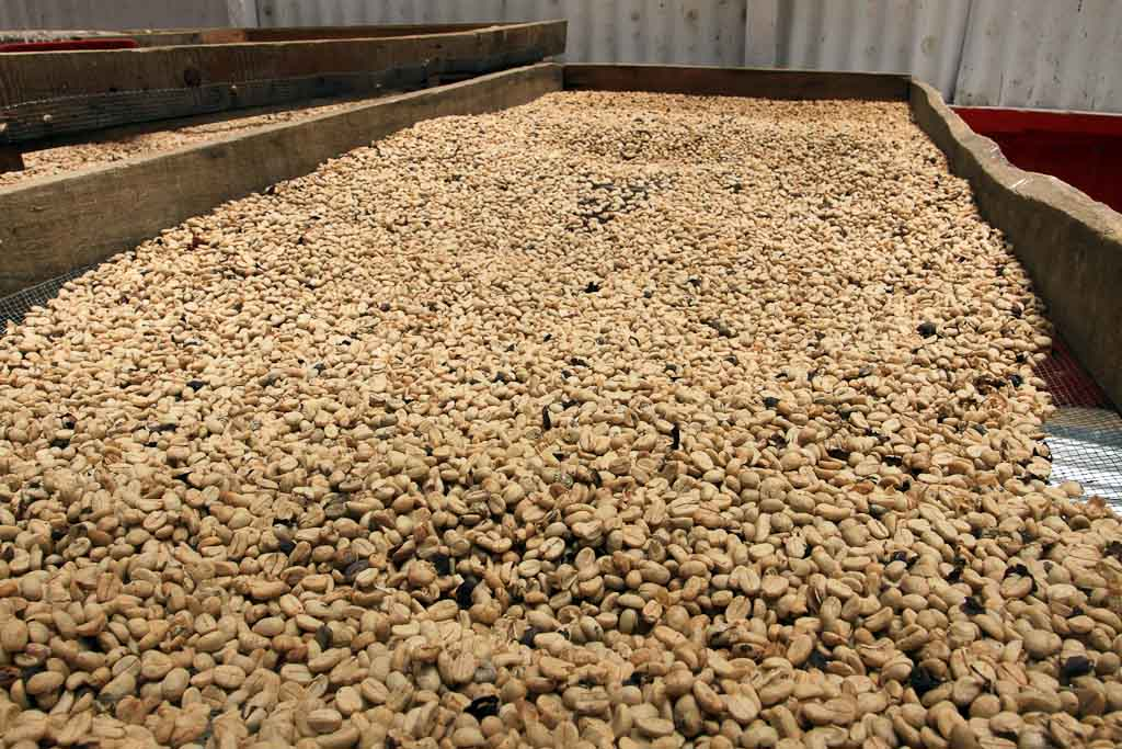 helaconia ranch coffee beans   - Costa Rica