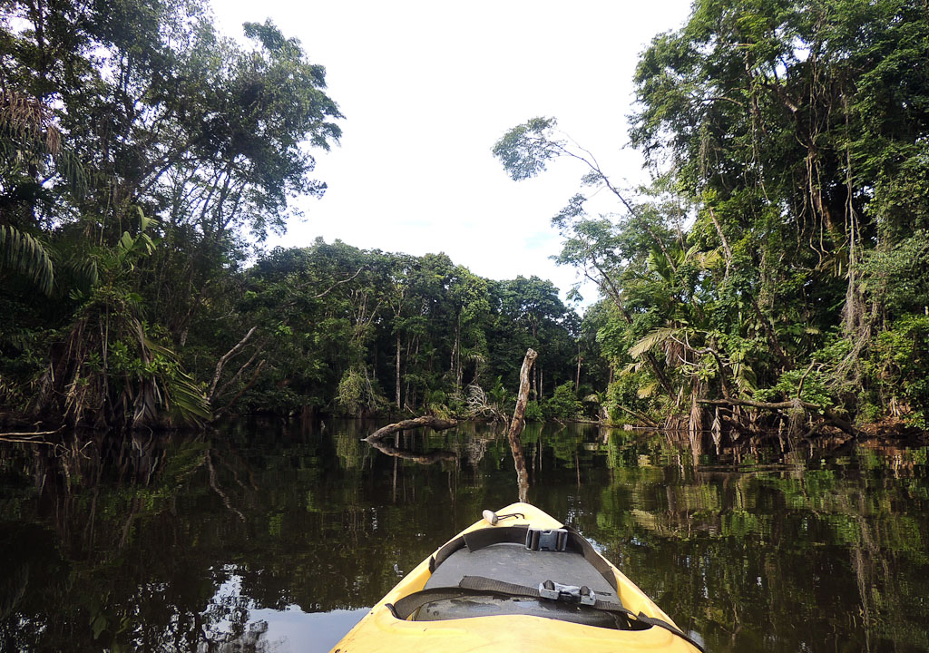 how conservation saved tortuguero blog lagoon 