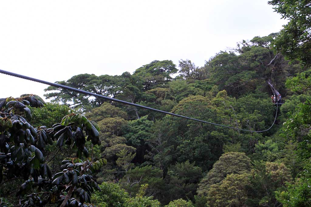 original canopy tour cable platform view 