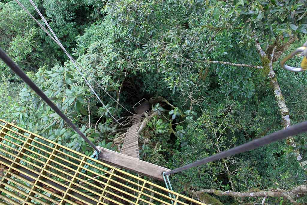 original canopy tour rope ladder 