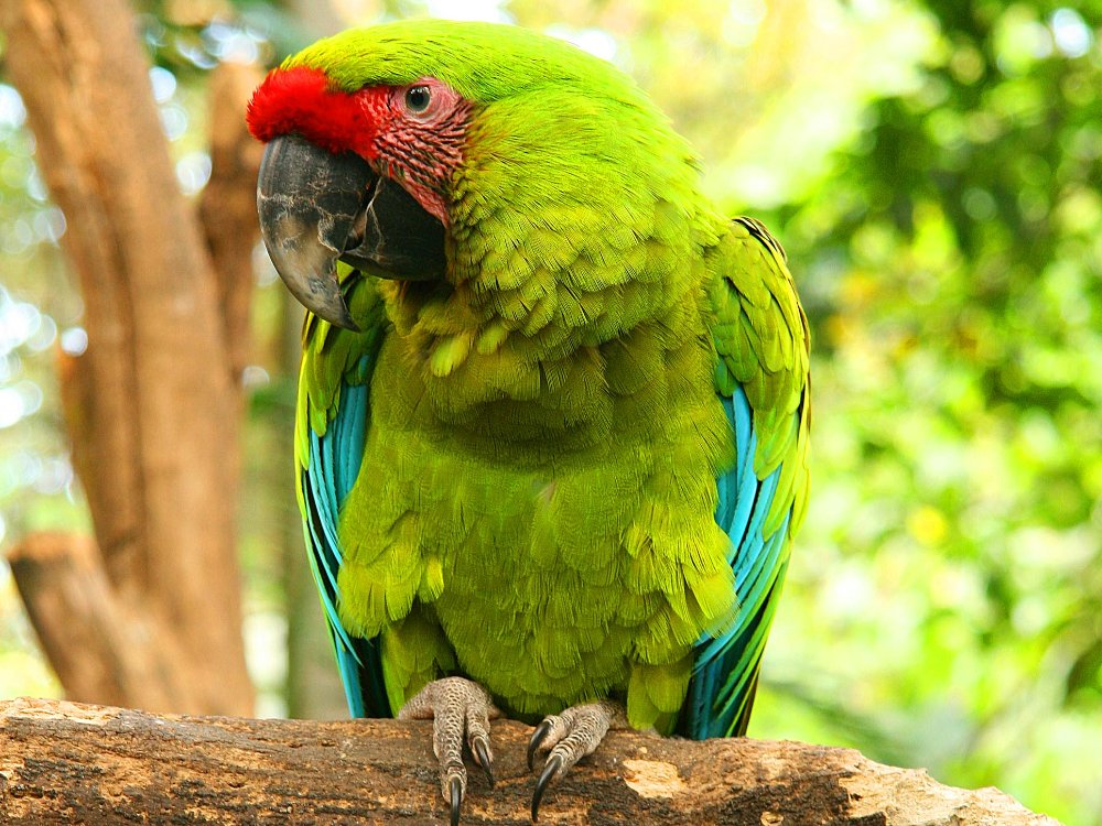 great green macaw perched on tree branch