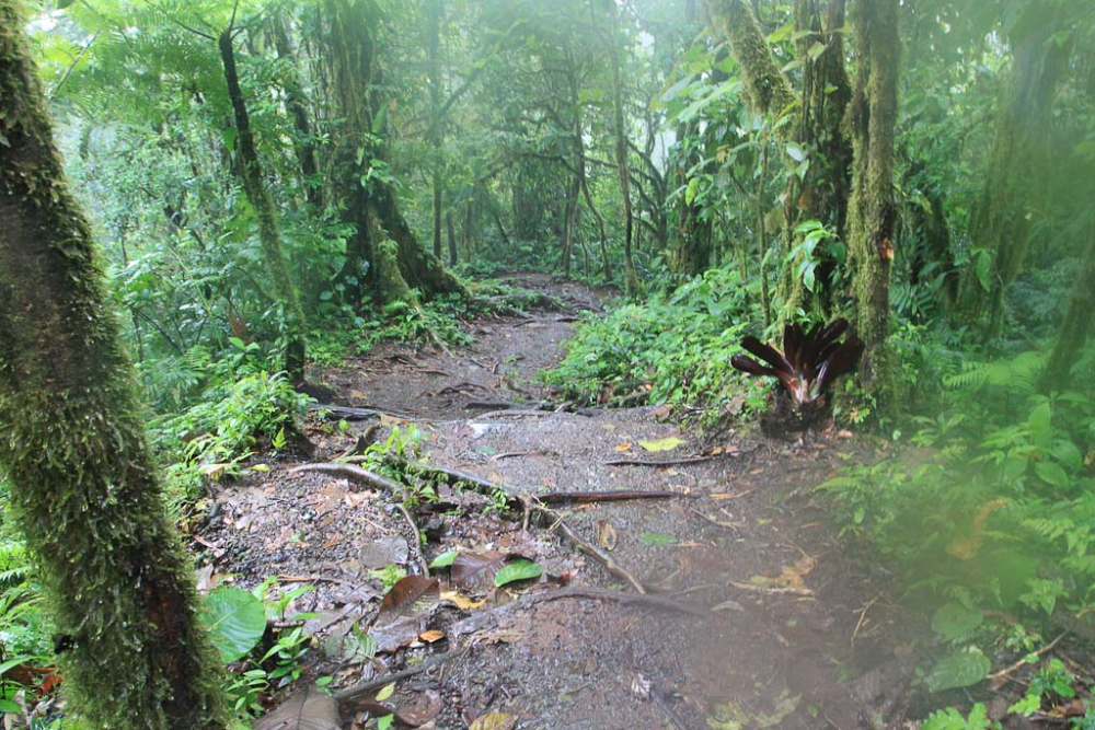 1,000 Little Waterfalls: Steps to Cerro Chato