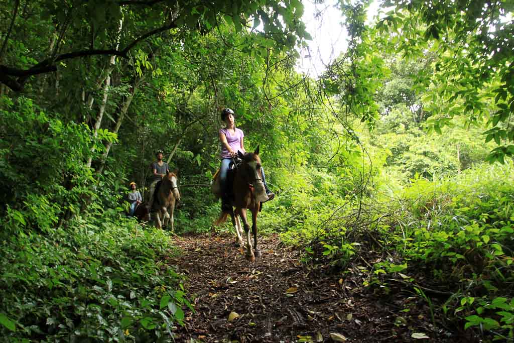 discovery horseback blog rainforest    - Costa Rica