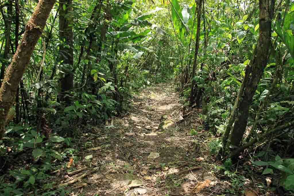 rancho margot forest trail    - Costa Rica