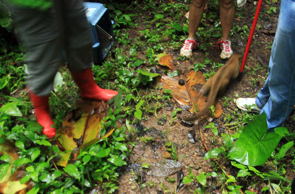 releasing the kinkajou blog release  