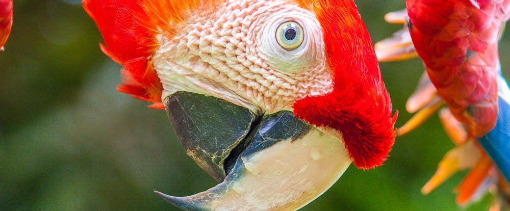 4 Day Nature & Wildlife Costa Rica $385