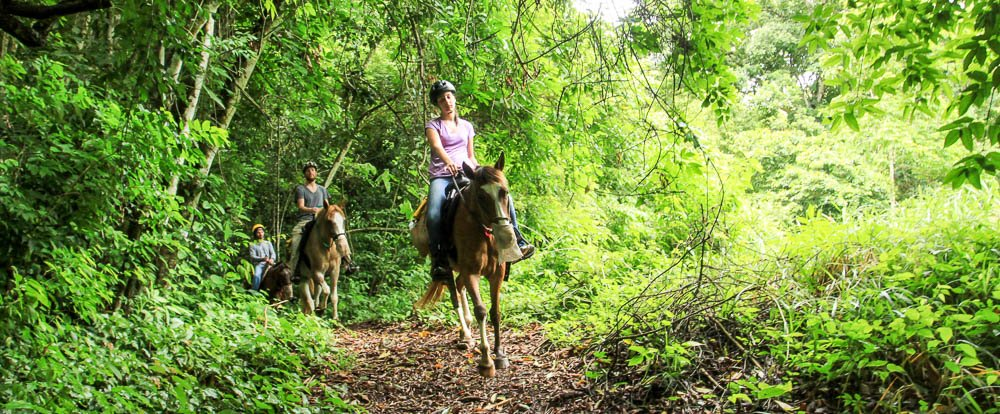 discovery horseback tour rainforest 