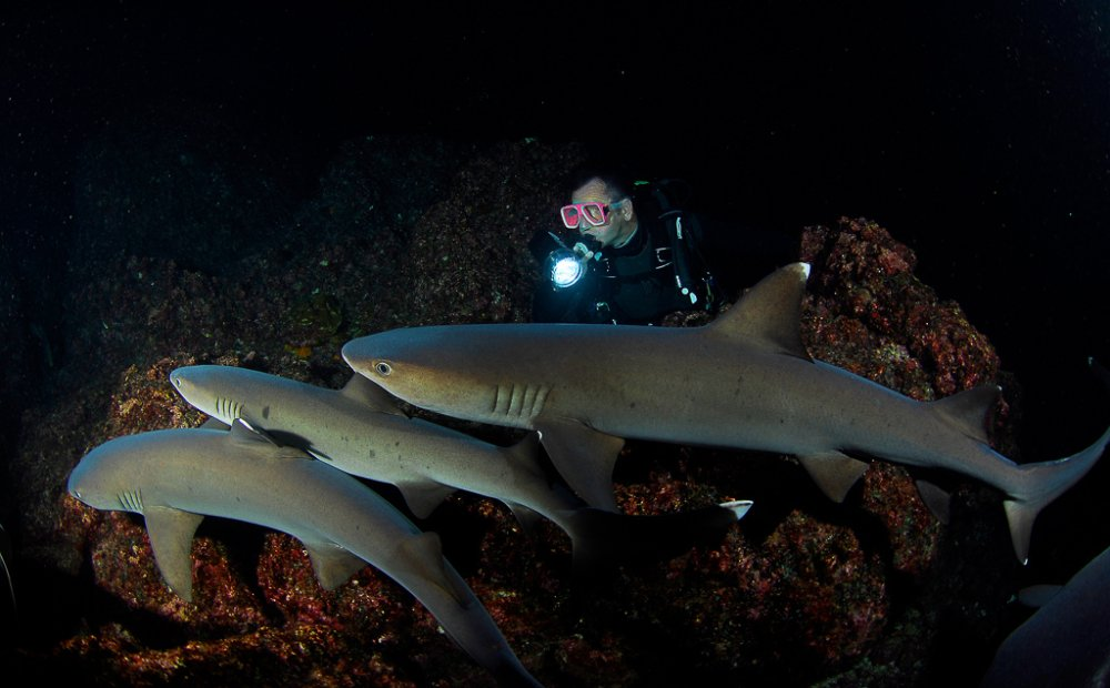 night diving sharks cocos