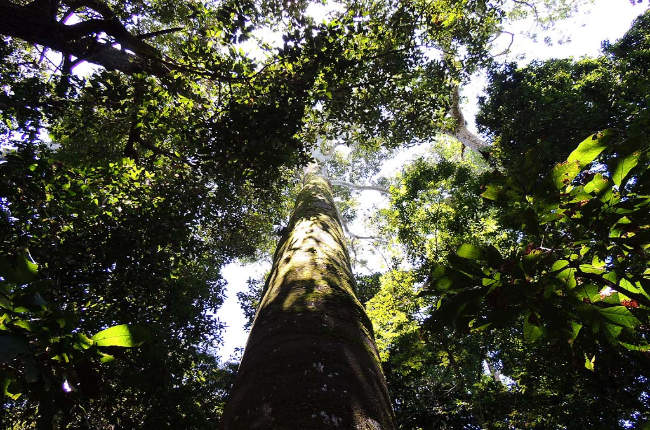 manuel antonio national park canopy  
