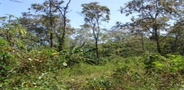 Investment Farm-Fruits, Forests & Home - Costa Rica