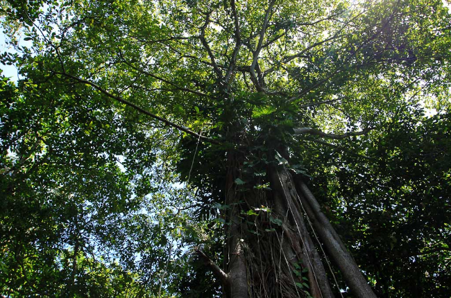 cahuita national park attraction page trees 