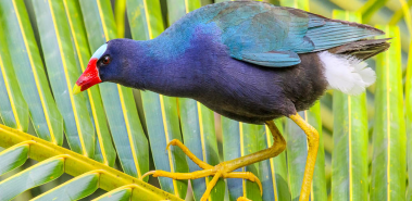 Best Birding Destinations - Costa Rica