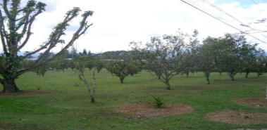 Commercial Sale - Costa Rica