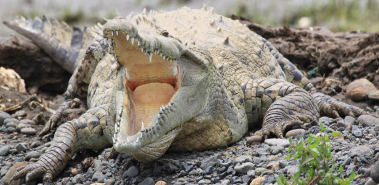Jaco Beach and Crocodile Safari - Costa Rica