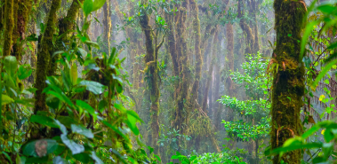 Los Angeles Cloud Forest Reserve - Costa Rica