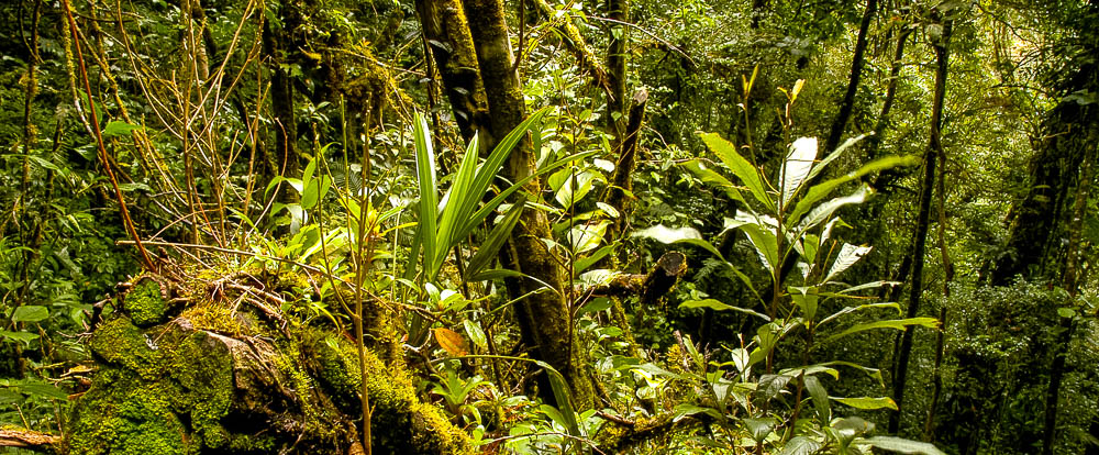 forest monteverde reserve 