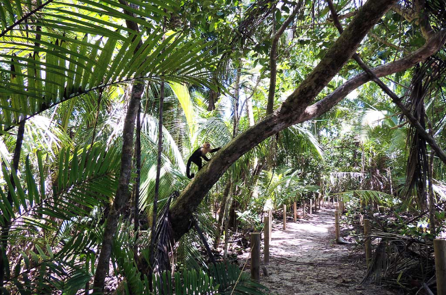 manuel antonio national park attraction beach trail monkey 