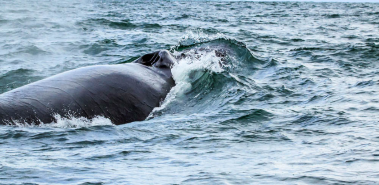 Ballena National Marine Park Whale Watching - Costa Rica