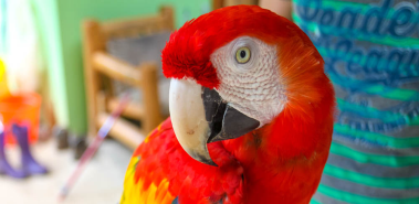 Ara Project - Macaw Breeding and Release Center - Costa Rica