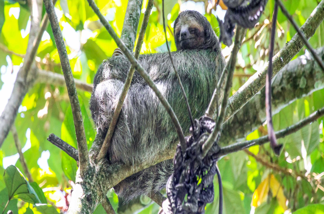tortuguero destination sloth 