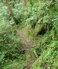Hiking Trails at Quetzals Paradise