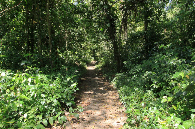 cahuita national park attraction page trail 