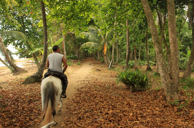 puerto viejo destination horseback ride almond leaves   - Costa Rica