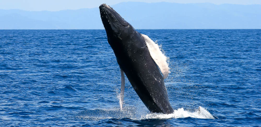 Dolphin & Whale Watching - Costa Rica