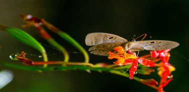 10 Wildlife Photography Tips - Costa Rica