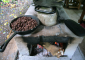 Roasting Cacao Seeds at Tirimbina Reserve