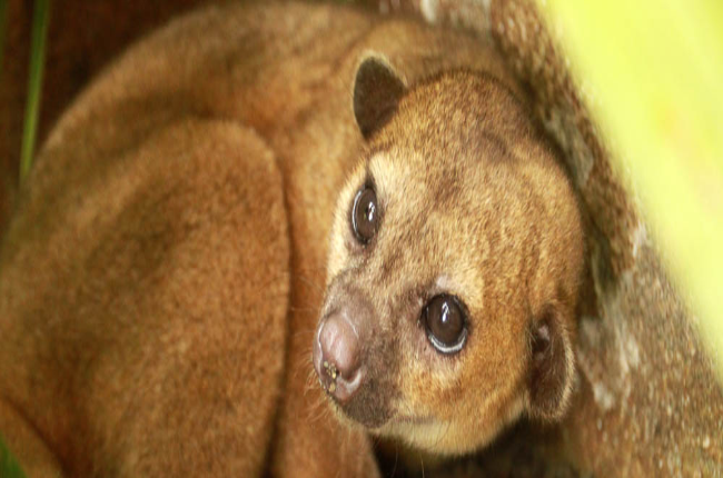 kinkajou meghashyamsandeep Kinkajou meghashyamsandeep 1069 words | 5 pages meghashyam sandeep vakacharla date: november 1st, 2014 course time: 9:30am (t, r) case: kinkajou bottle cutter i meghashyam sandeep vakacharla did not receive any content assistance (except editing assistance.