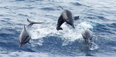 Dolphins - Costa Rica