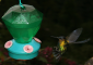 Hummingbird at Feeder on the Cerro de la Muerte