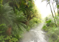 Lush Foliage at Tabacon Hot Springs