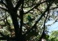 Resplendent Quetzal Perched on a Branch