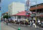 Horse Parade in Downtown Liberia