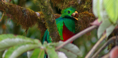 Los Quetzales National Park - Costa Rica