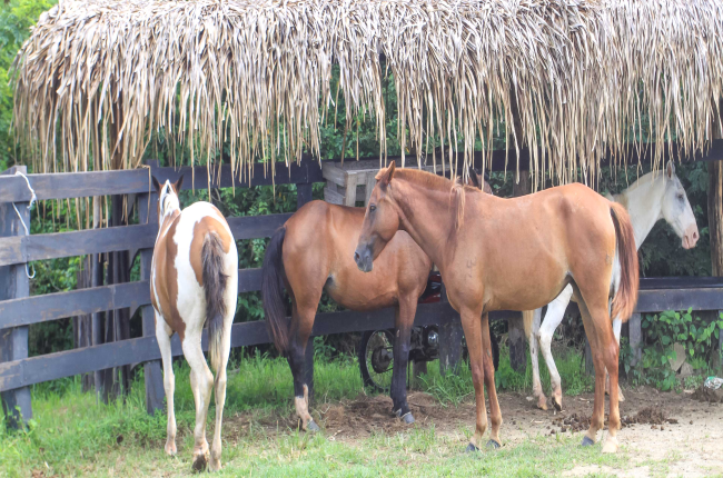 horses in a ranch
